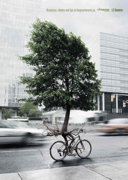 tree on a bike