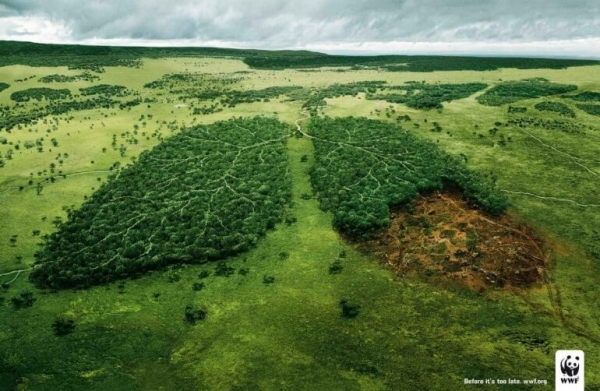 world wide fund deforestation ad